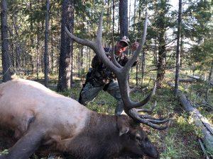 2018 archery elk kill, tree stand elk, kill shot elkarcehry kill shot bull elk, island park elk, hunt island park elk